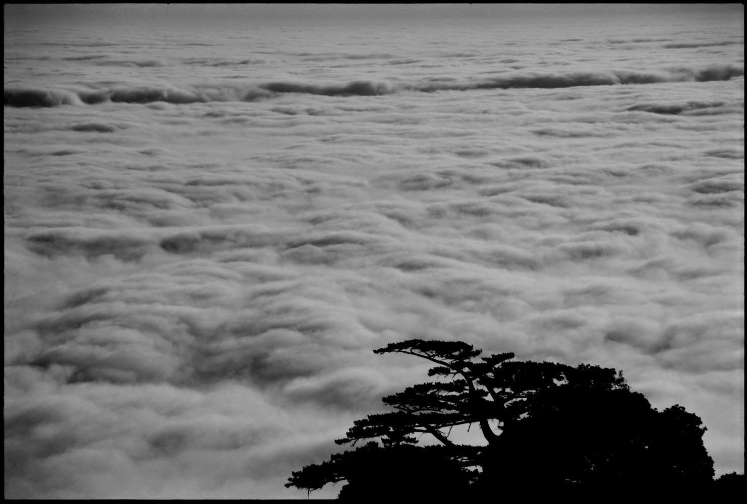 Mt Tam, 1999 by Julian Rad