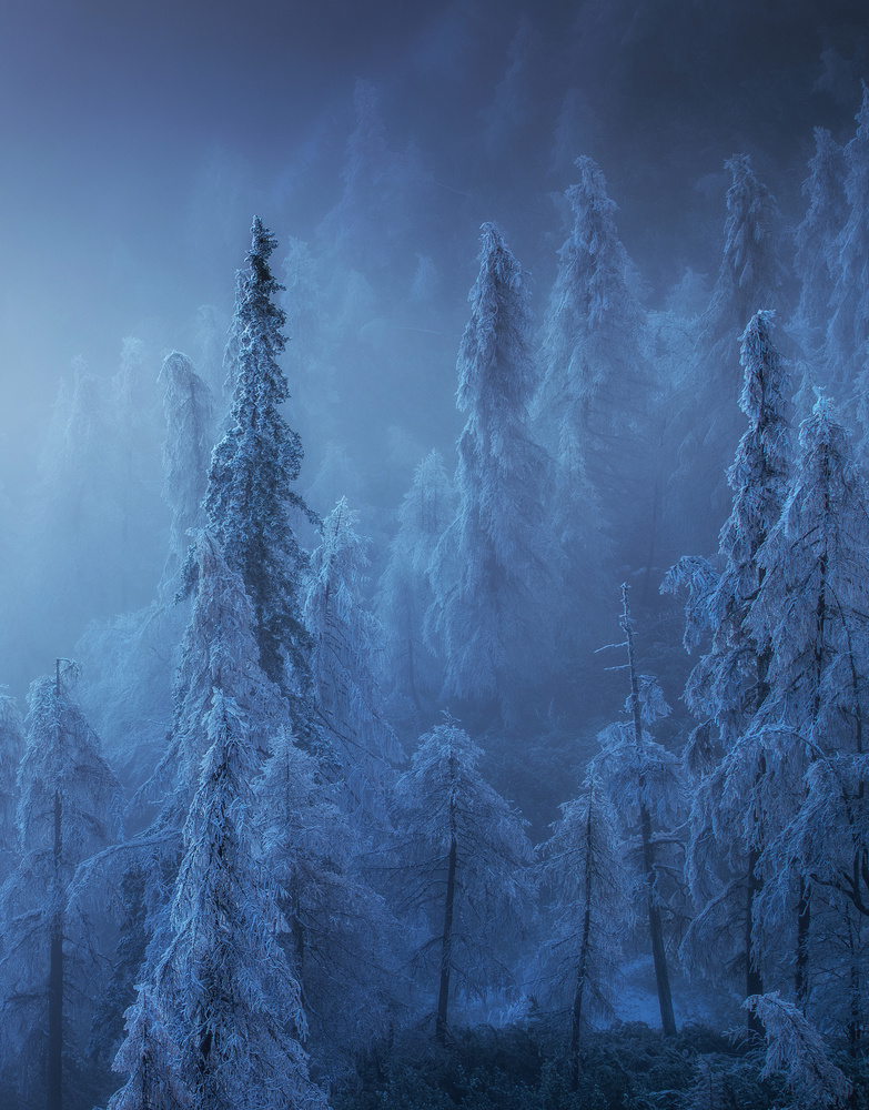 Winter forest by Ales Krivec