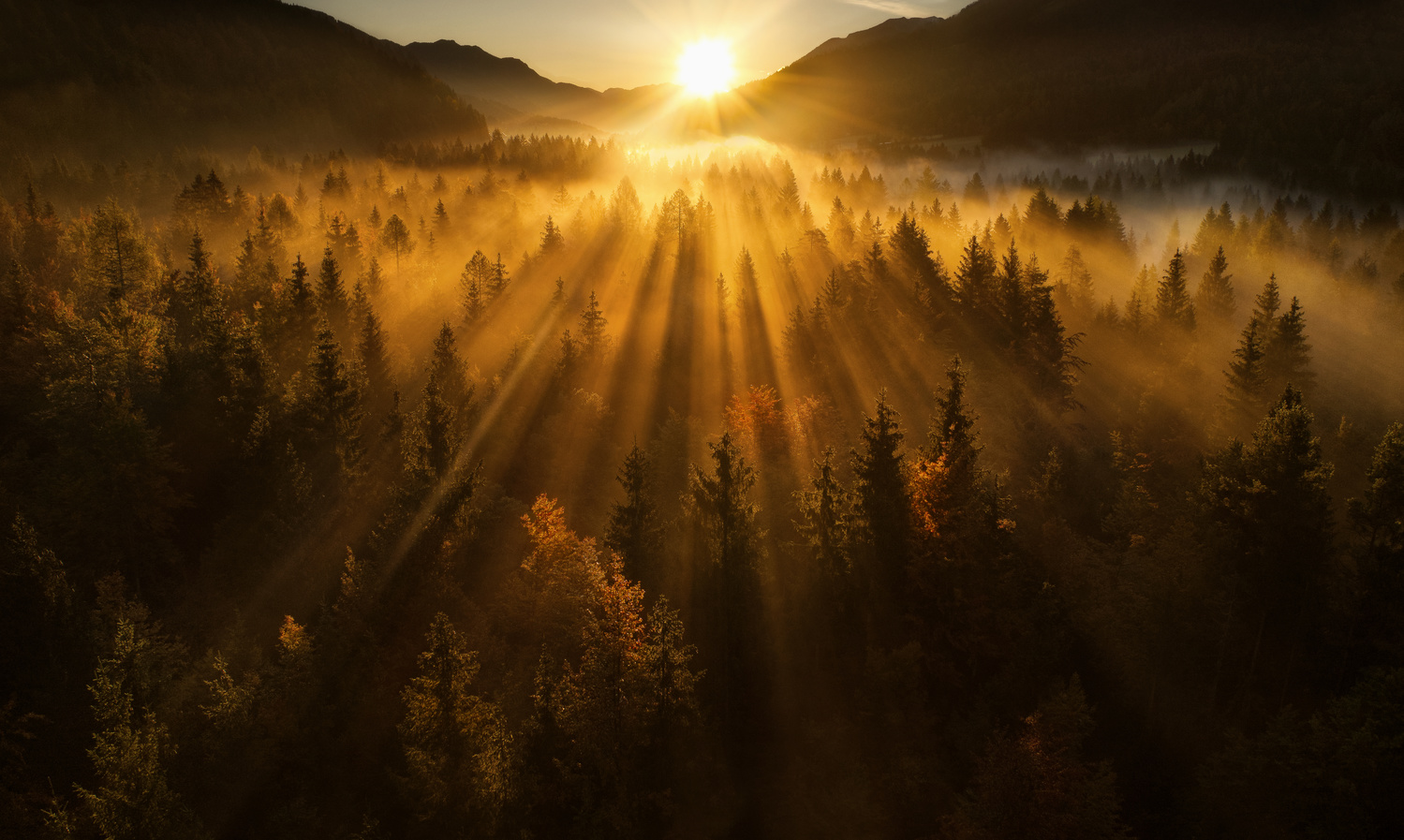 Aerial shot of an autumn forest by Ales Krivec