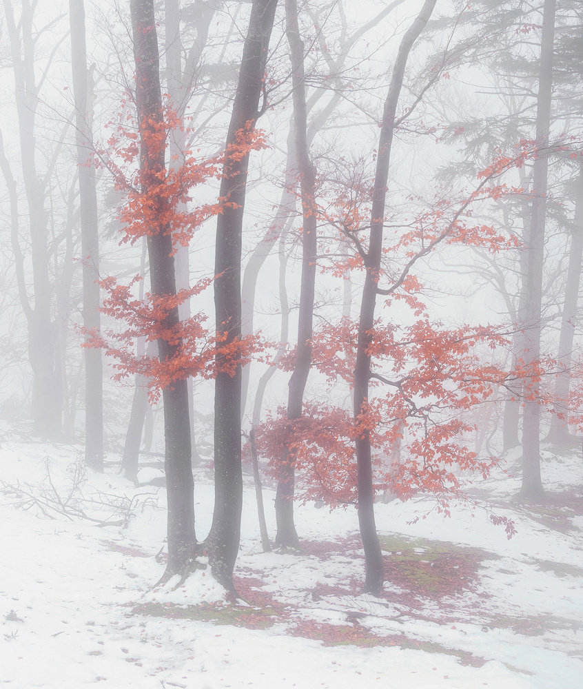 When winter and autumn meet by Ales Krivec