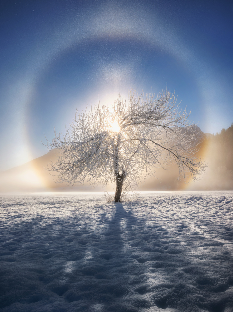 Ring of frost by Ales Krivec