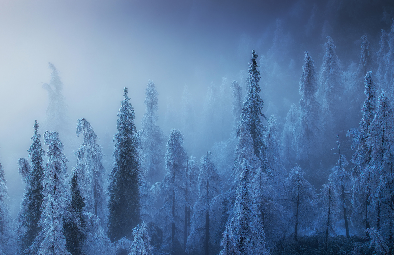Enchanted winter forest by Ales Krivec