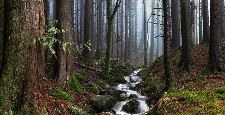 Misty Forest Stream by Eirik Sørstrømmen