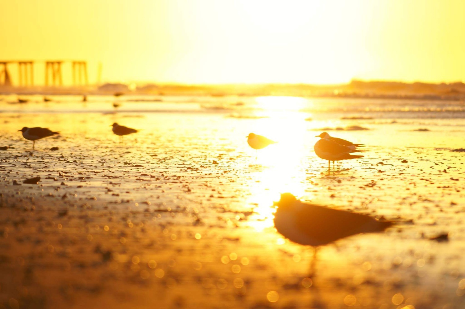 Sunrise at the beach by Andy Borysowski