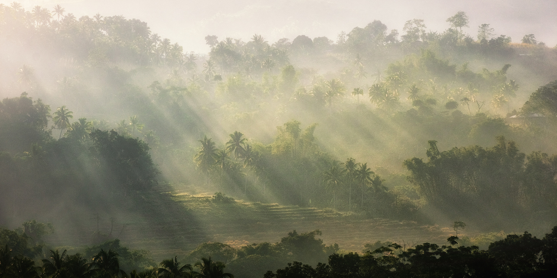 Morning Glory by John Kimwell Laluma