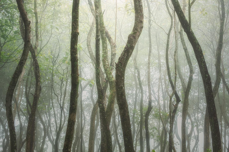 Hidden Woods by John Kimwell Laluma
