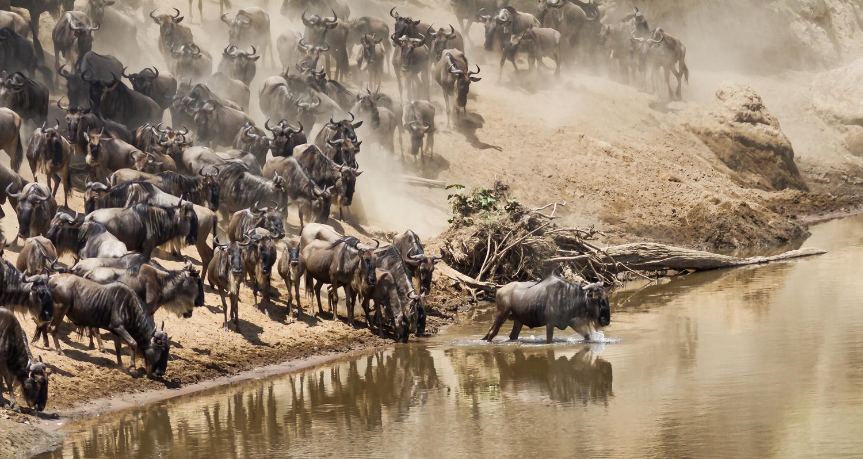 Taking the plunge by Ram Ramkumar