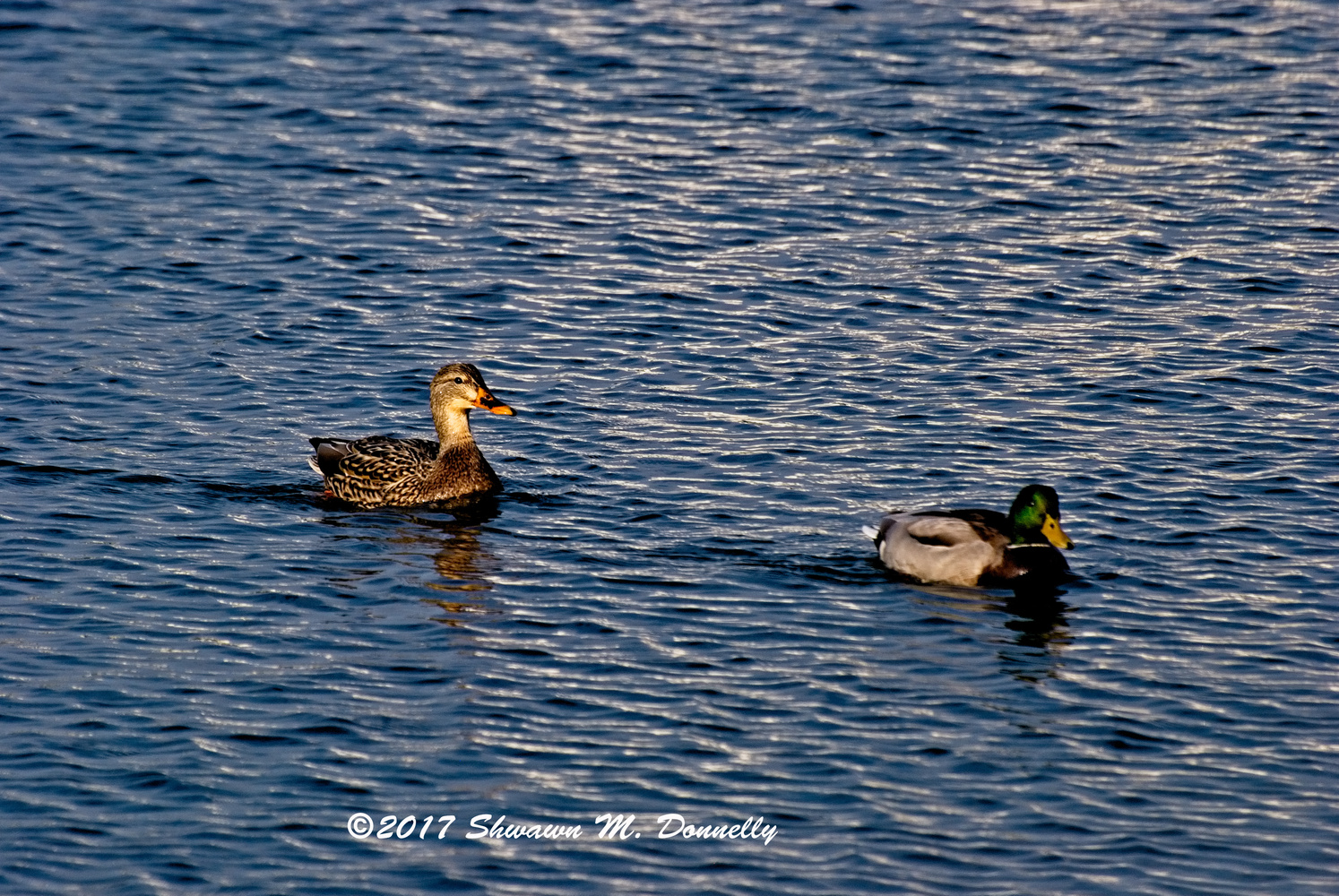 Get your ducks in a row. by Shawn Donnelly