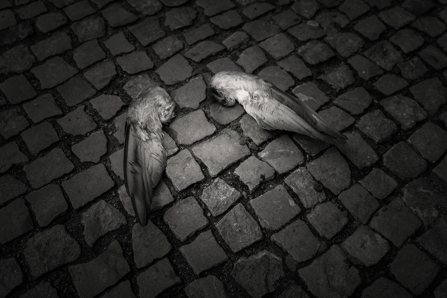 It must have been angel... by anja friedrich