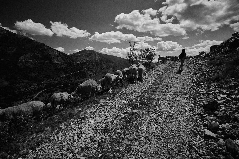 On the road to Medenic-pick by Ivo Veljanov