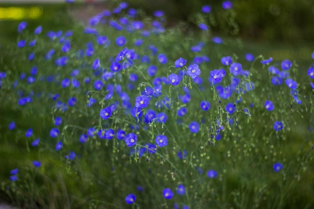 Wildflower Garden by Daniel Crowder