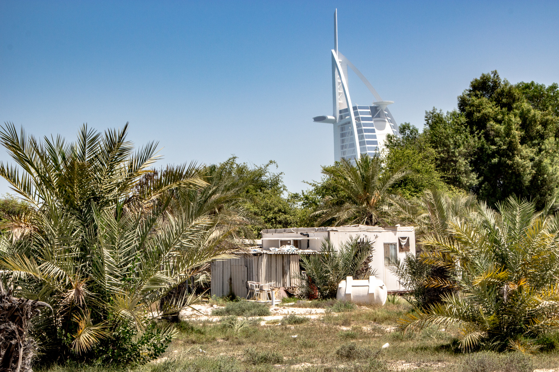 Date farm, Al Sufouh, Dubai by Daniel Simon