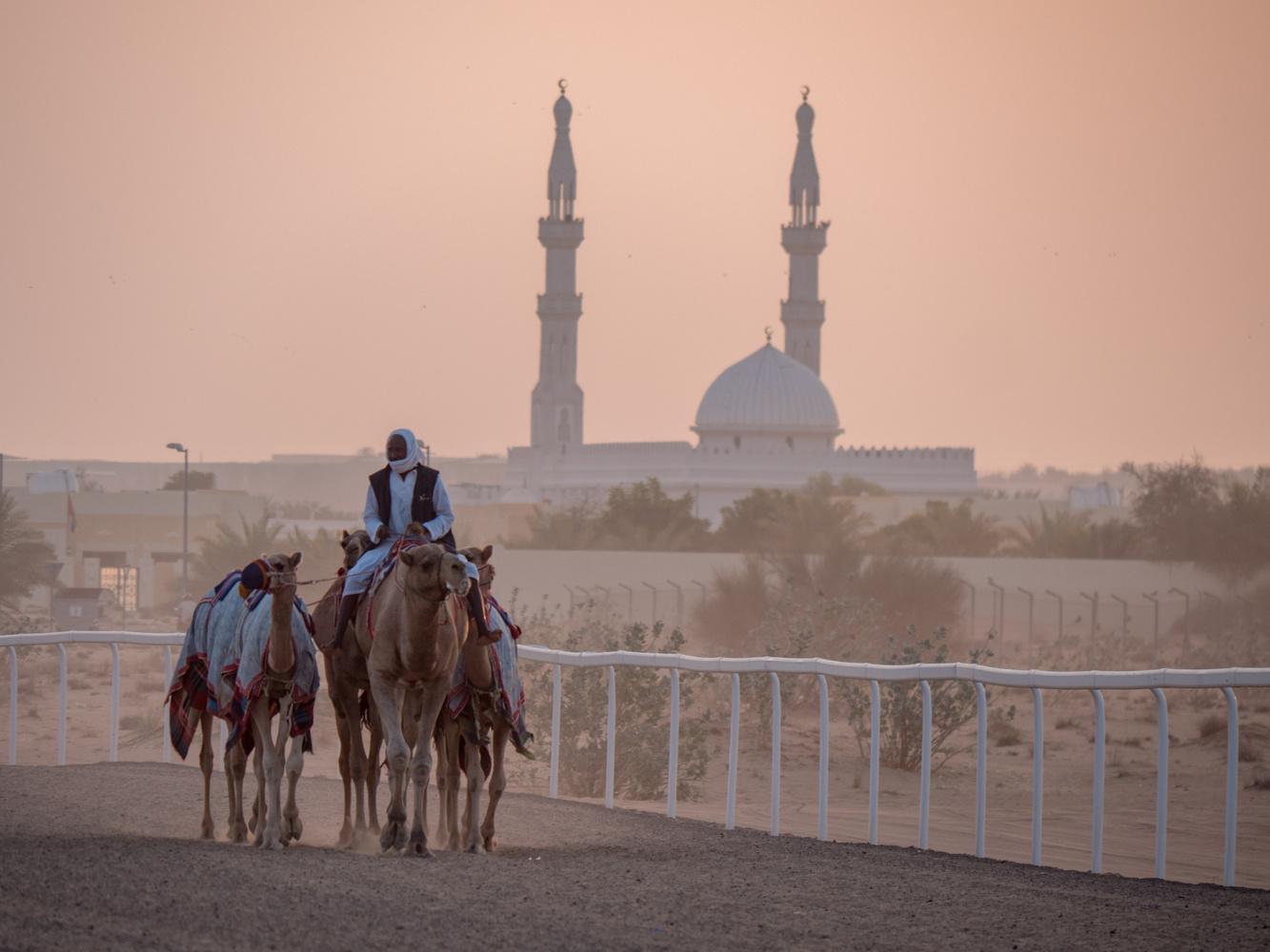 Camel trainers, Dubai by Daniel Simon