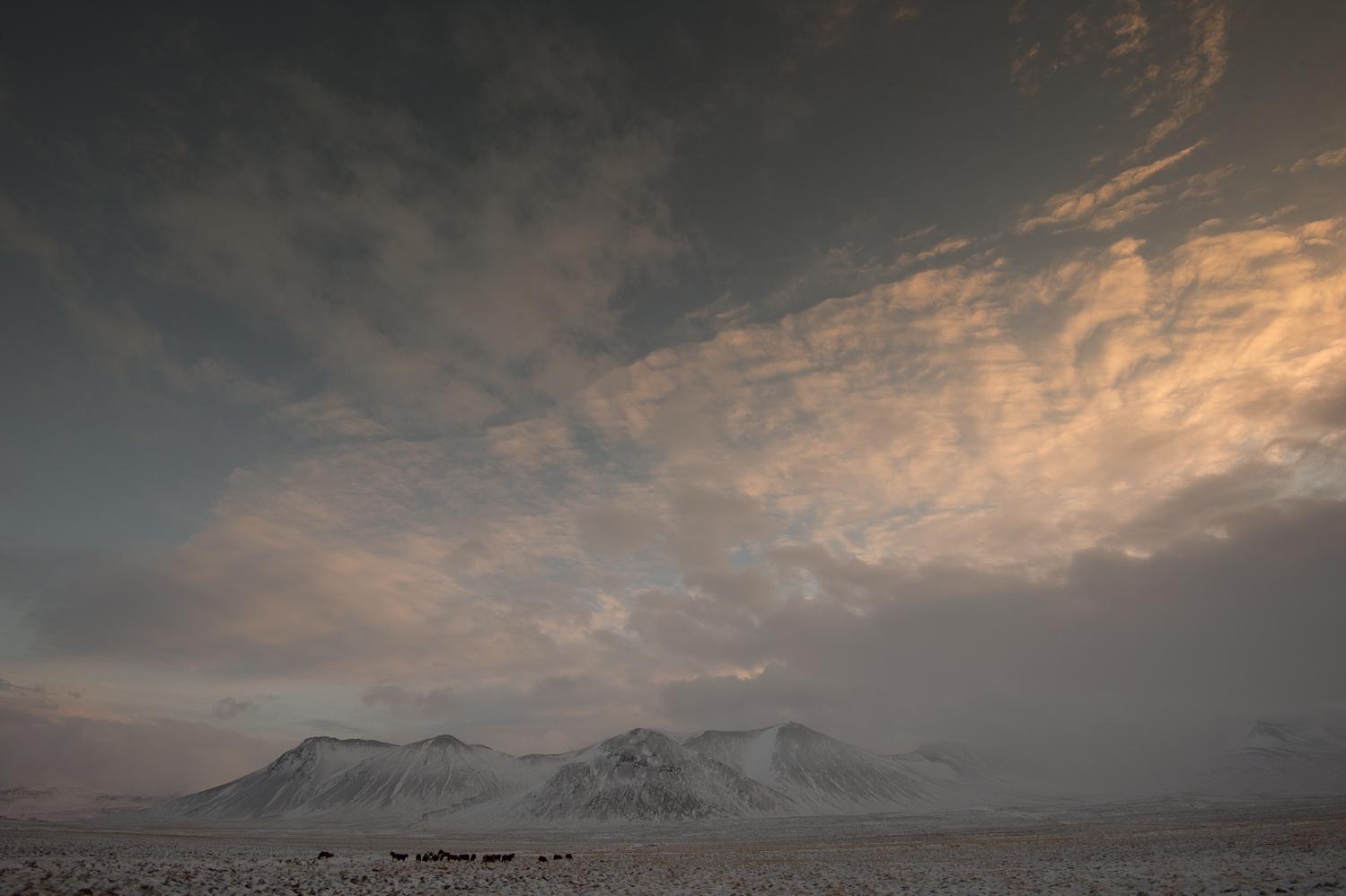 Icelandic Horses by Alison Bailey
