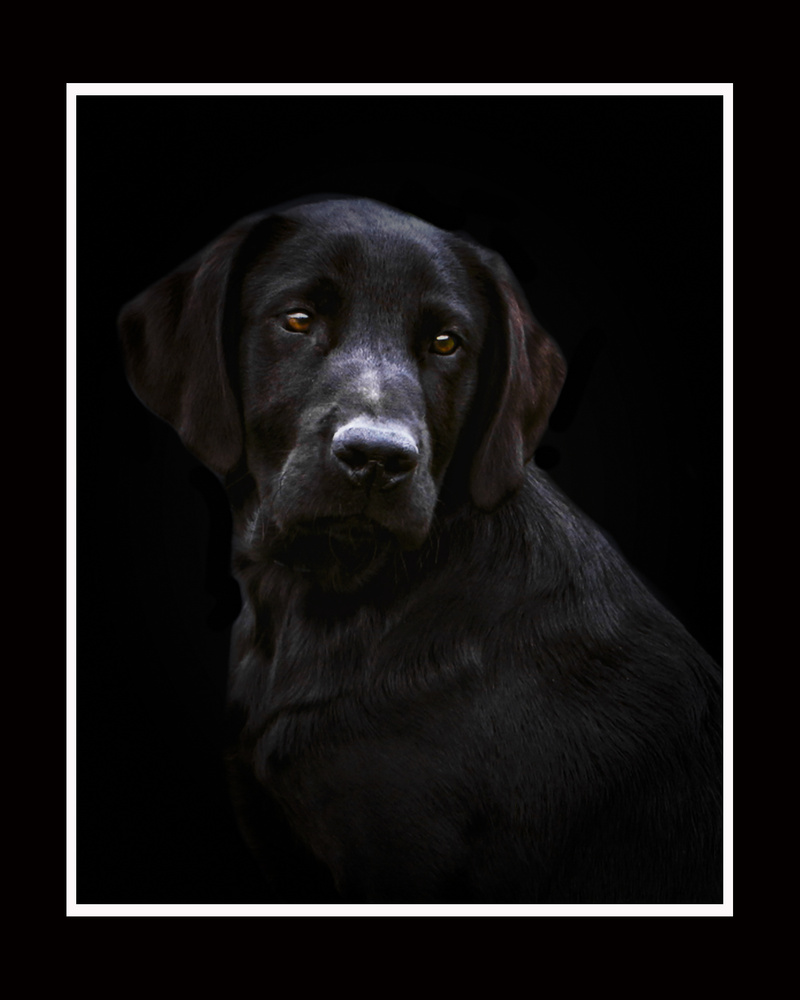 Black Lab pup 2 by Jim McConnell