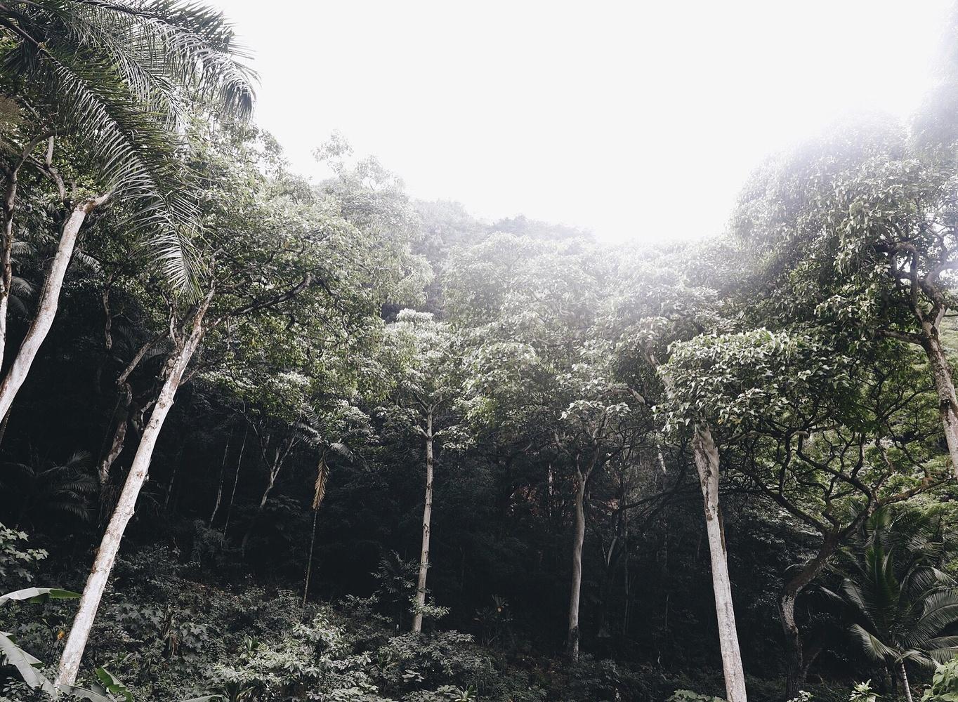 Oahu, HI by Ekaterina Soubbotina