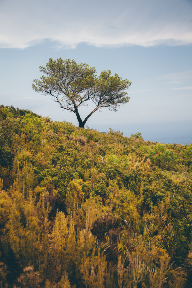 Sierra d'Irta by Tim Krause