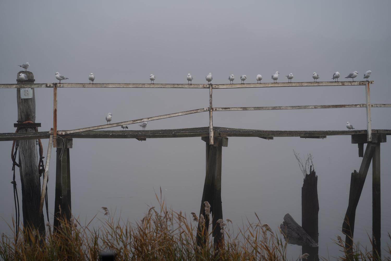 Seagulls by Stuart Fontyn