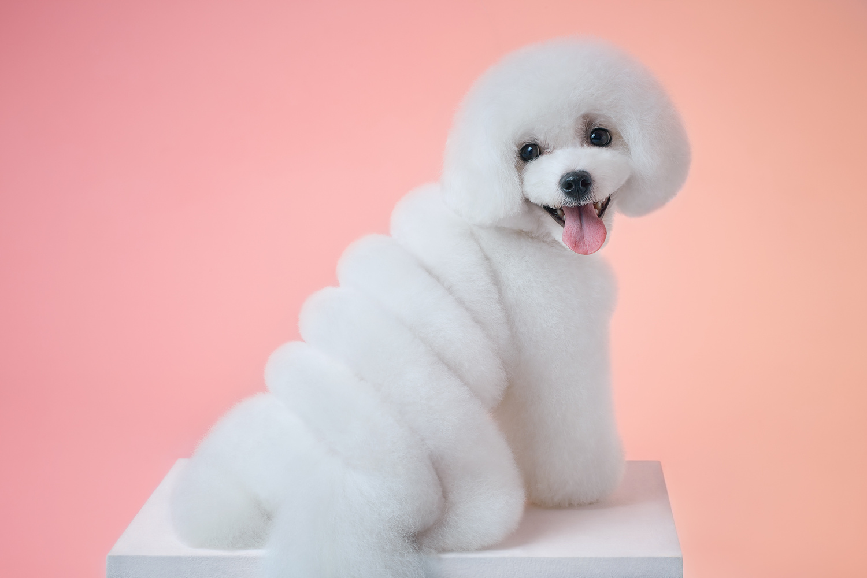 Ice-cream Dog by Alexander Khokhlov