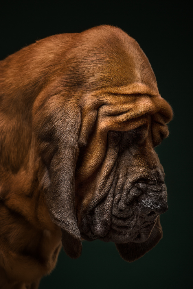 Folds and Wrinkles by Alexander Khokhlov
