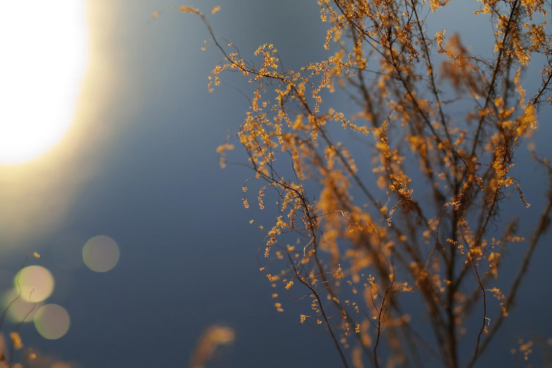 glimmer by CHRIS STAGL