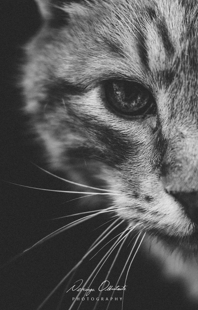 cat looks like tiger  by Neringa olbutaite