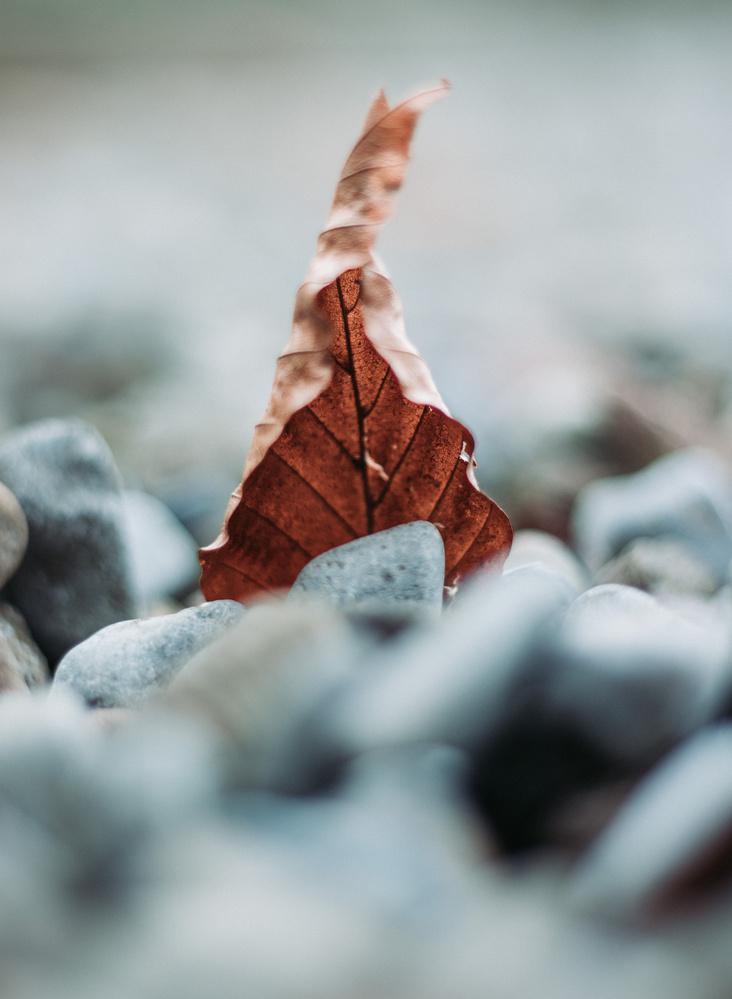 leaf by Neringa olbutaite