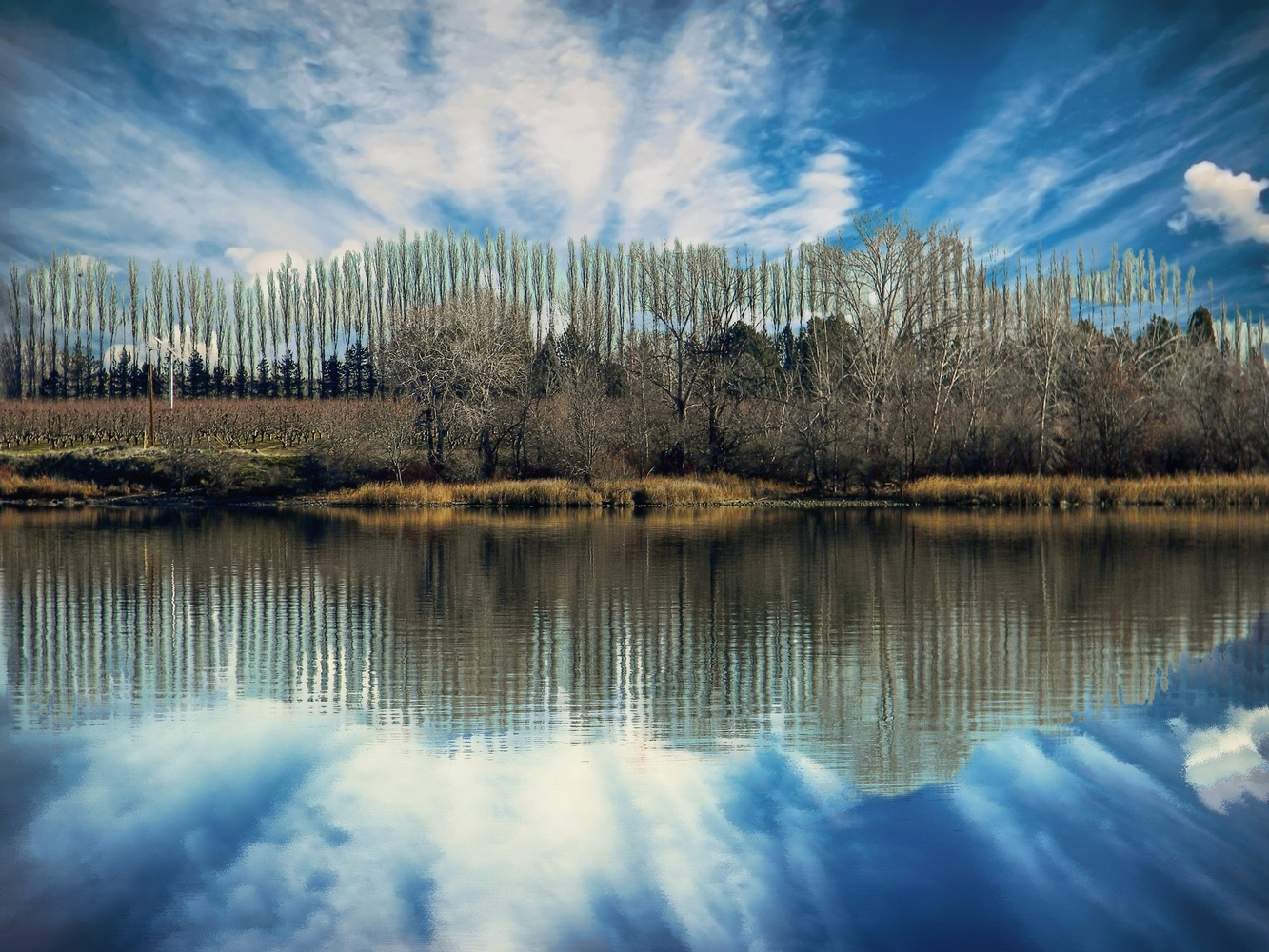 The tree line by Chris Snyder