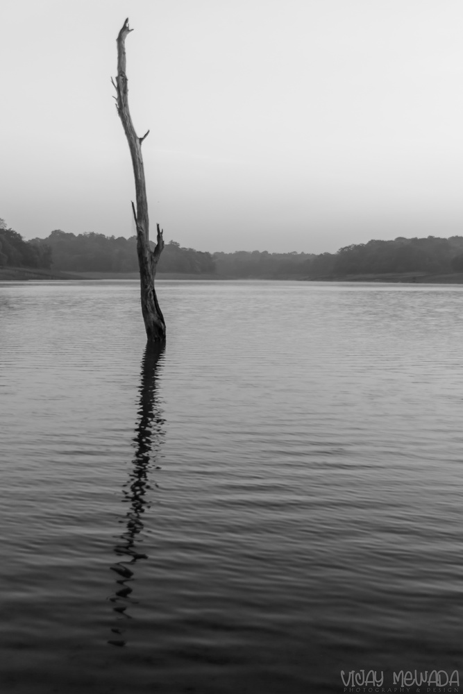 Ripples by Vijay Mewada