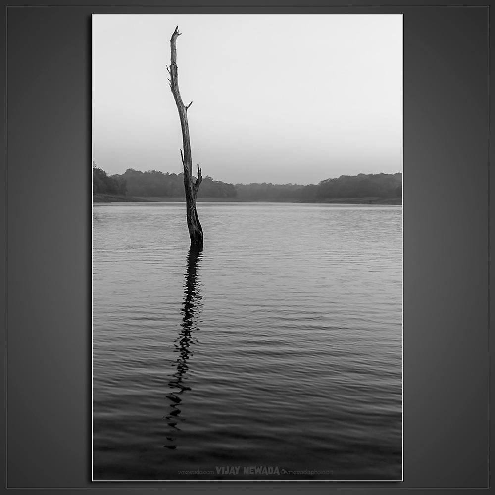 SOLITARY by Vijay Mewada
