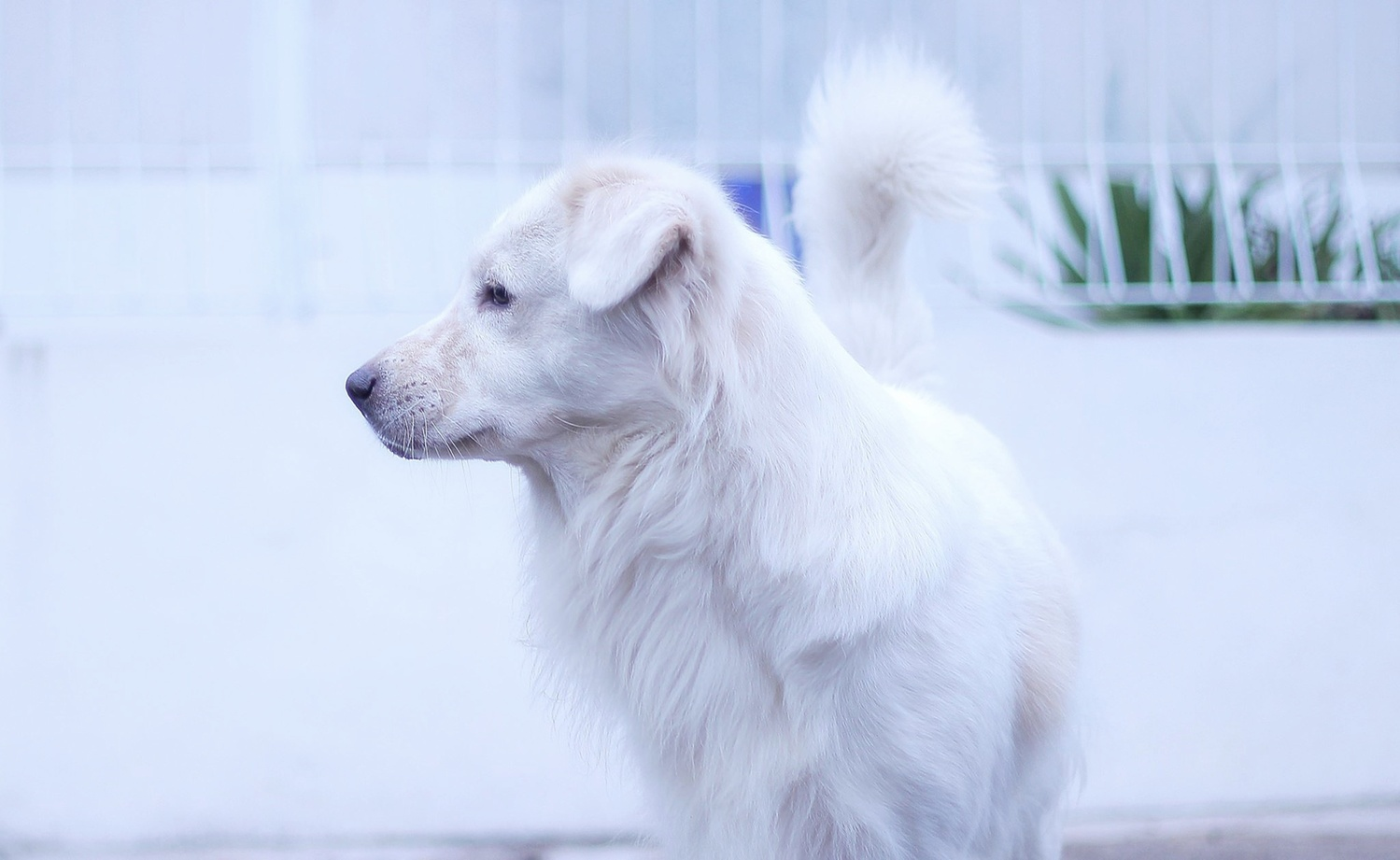White Dog by Marco Lth