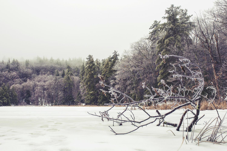 Frozen by ALEXANDER COLE
