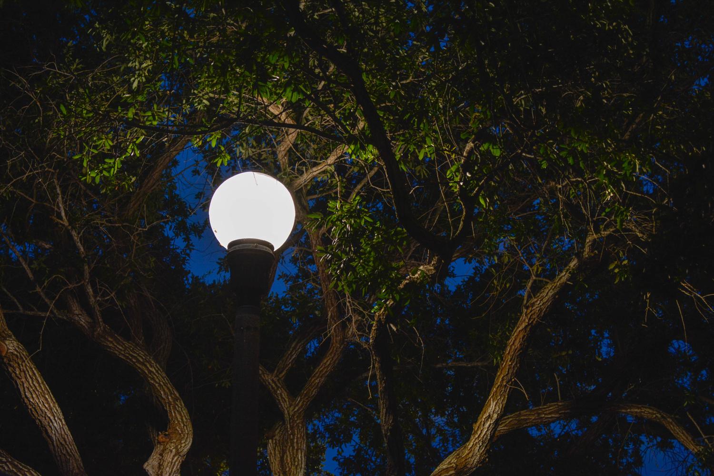 Street Lamp  by Robert Bruton