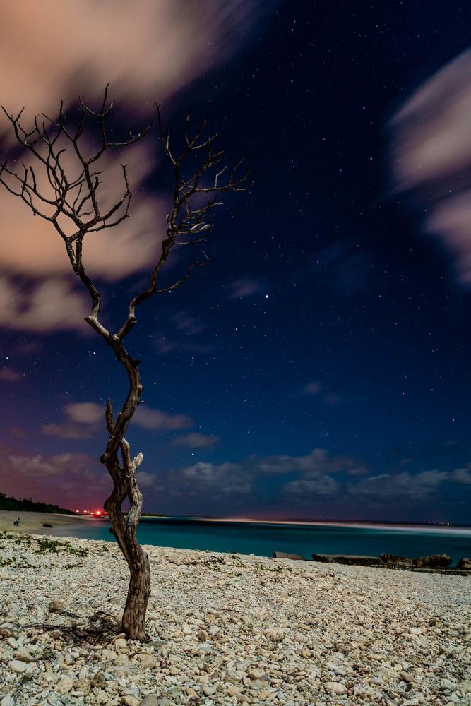 Dead Tree at Rock Pier by Aaron Oliveri