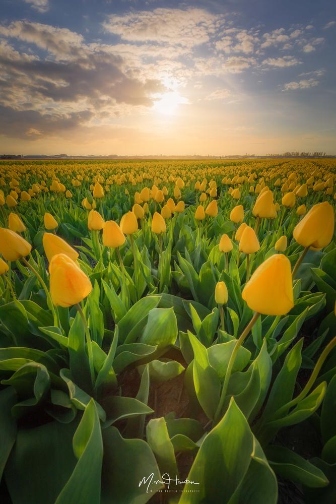 Yellow by Markus van Hauten