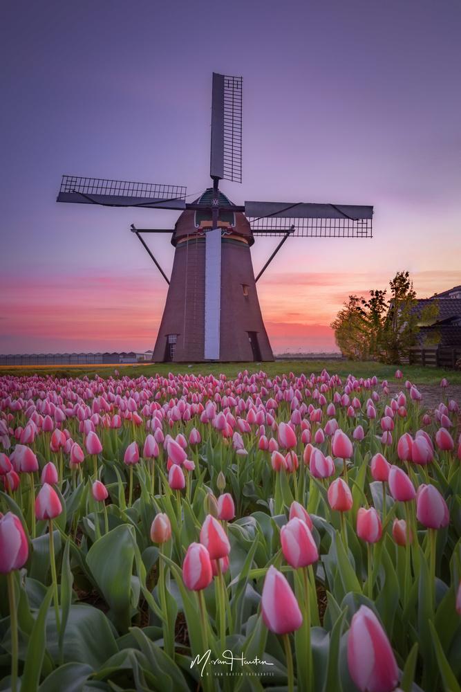 Spring time by Markus van Hauten