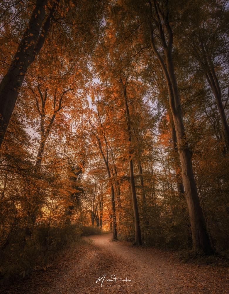 Autumn trees by Markus van Hauten