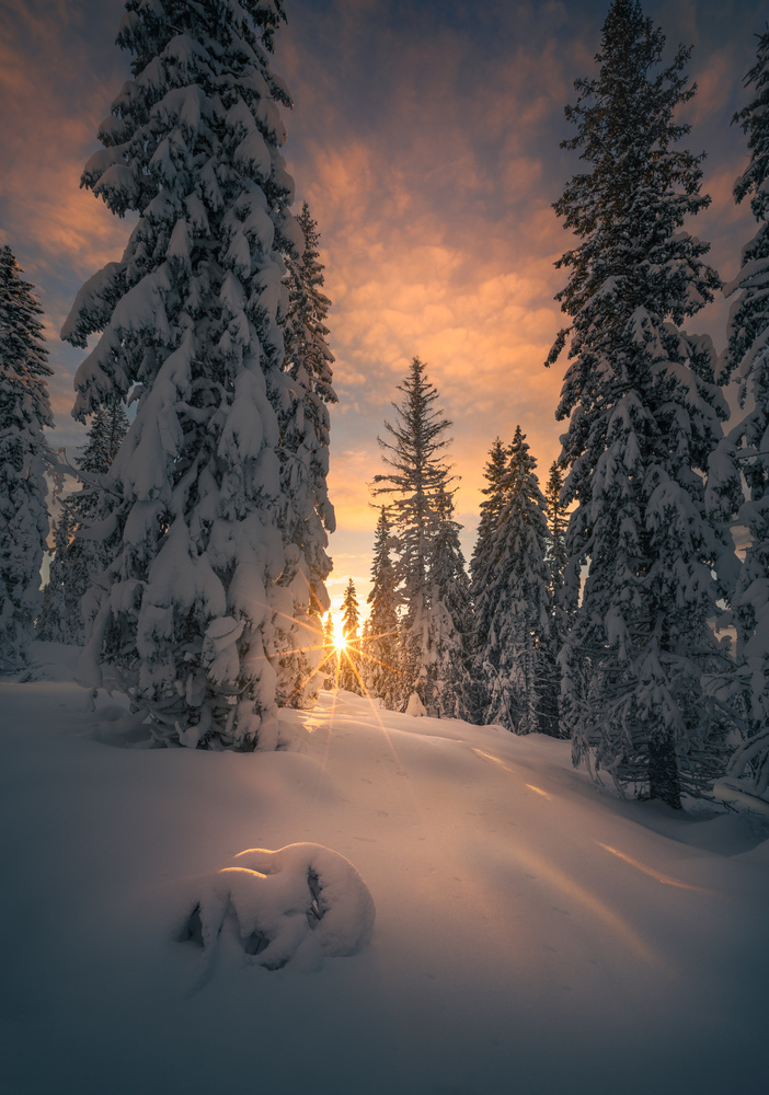Snow Garden by Ole Henrik Skjelstad