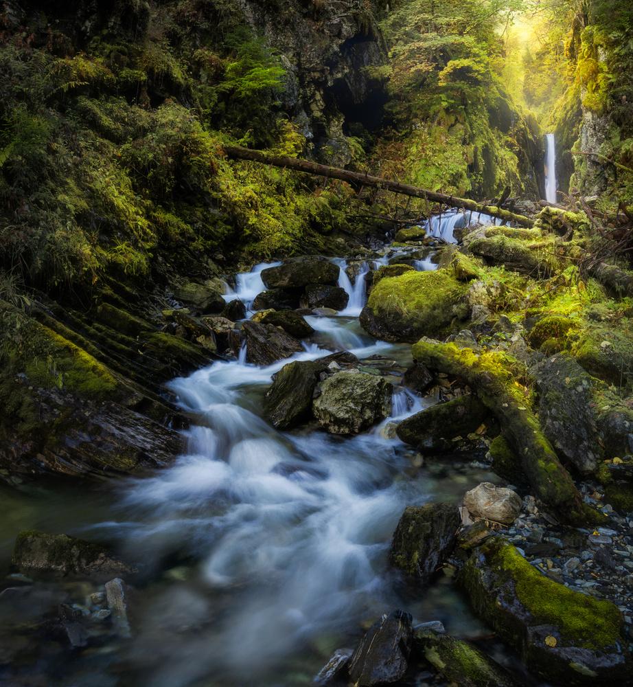 Jungle Vibes by Ole Henrik Skjelstad