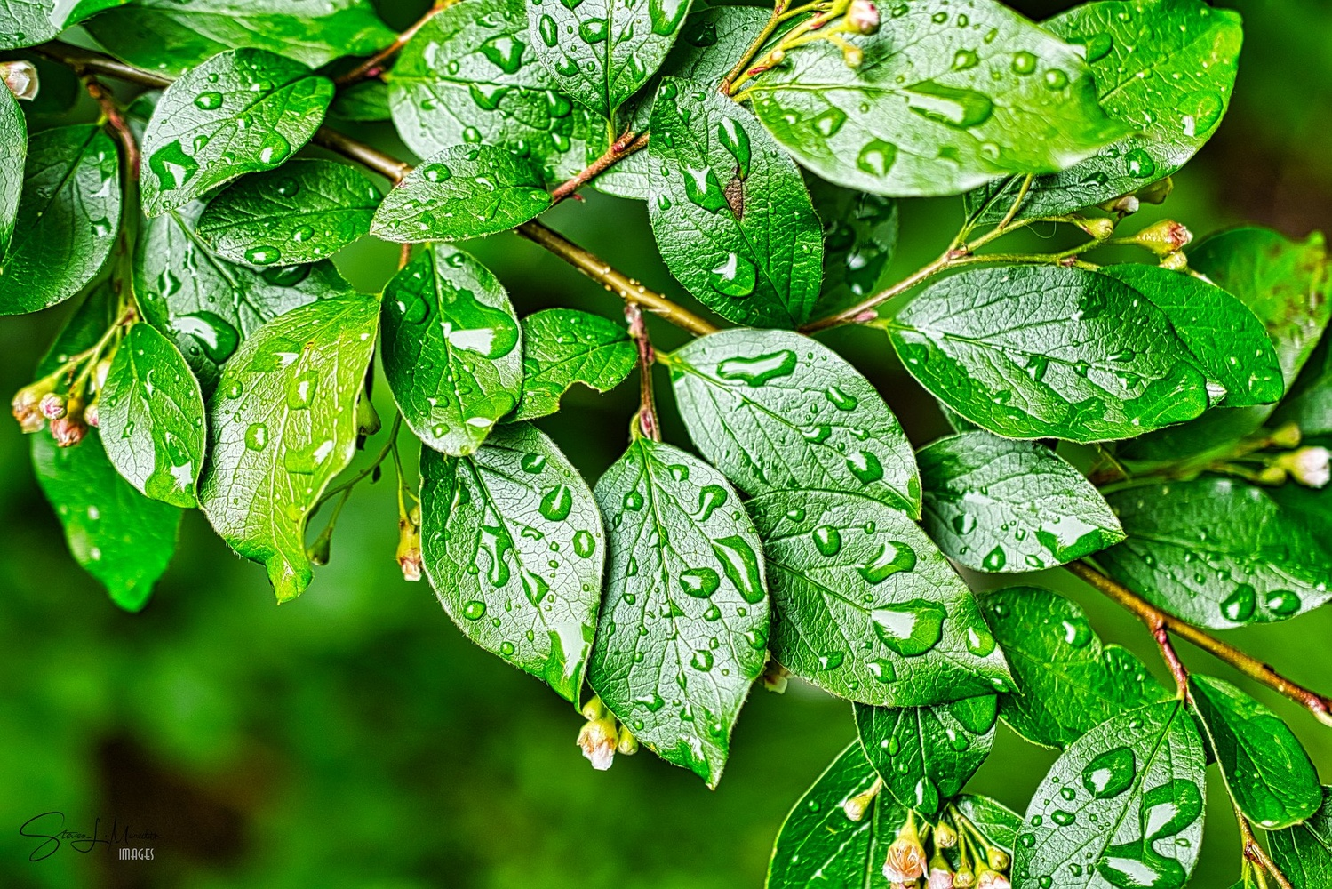 Leaves after a rainstorm by Steve Meredith