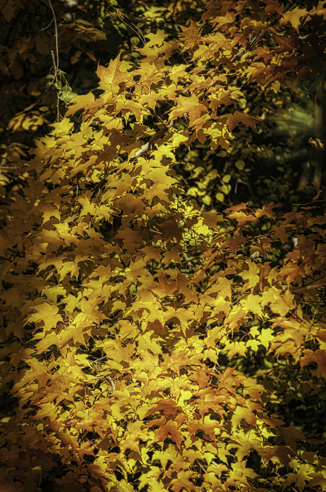 Fall in my Backyard by Steve Meredith
