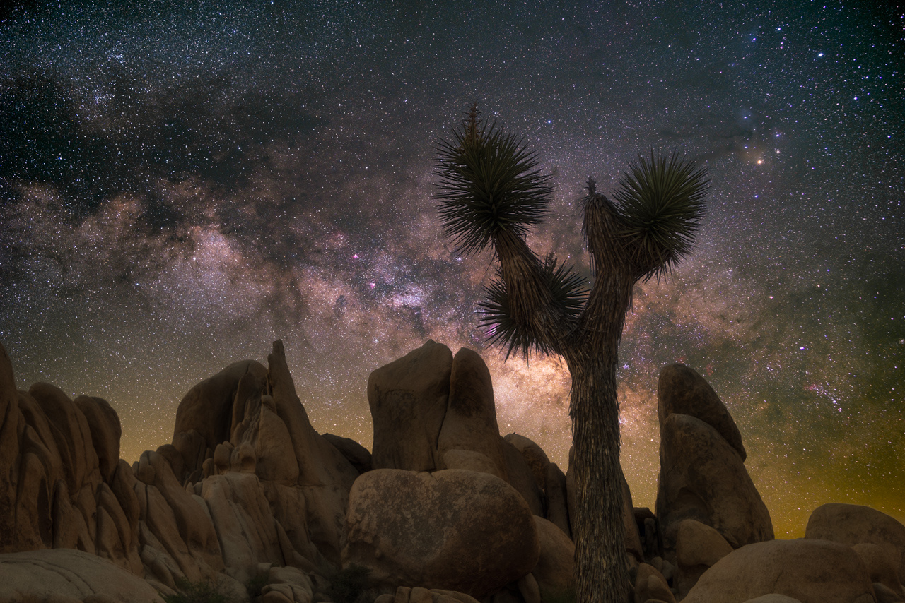 Quintessential Joshua Tree by Ryan Luna