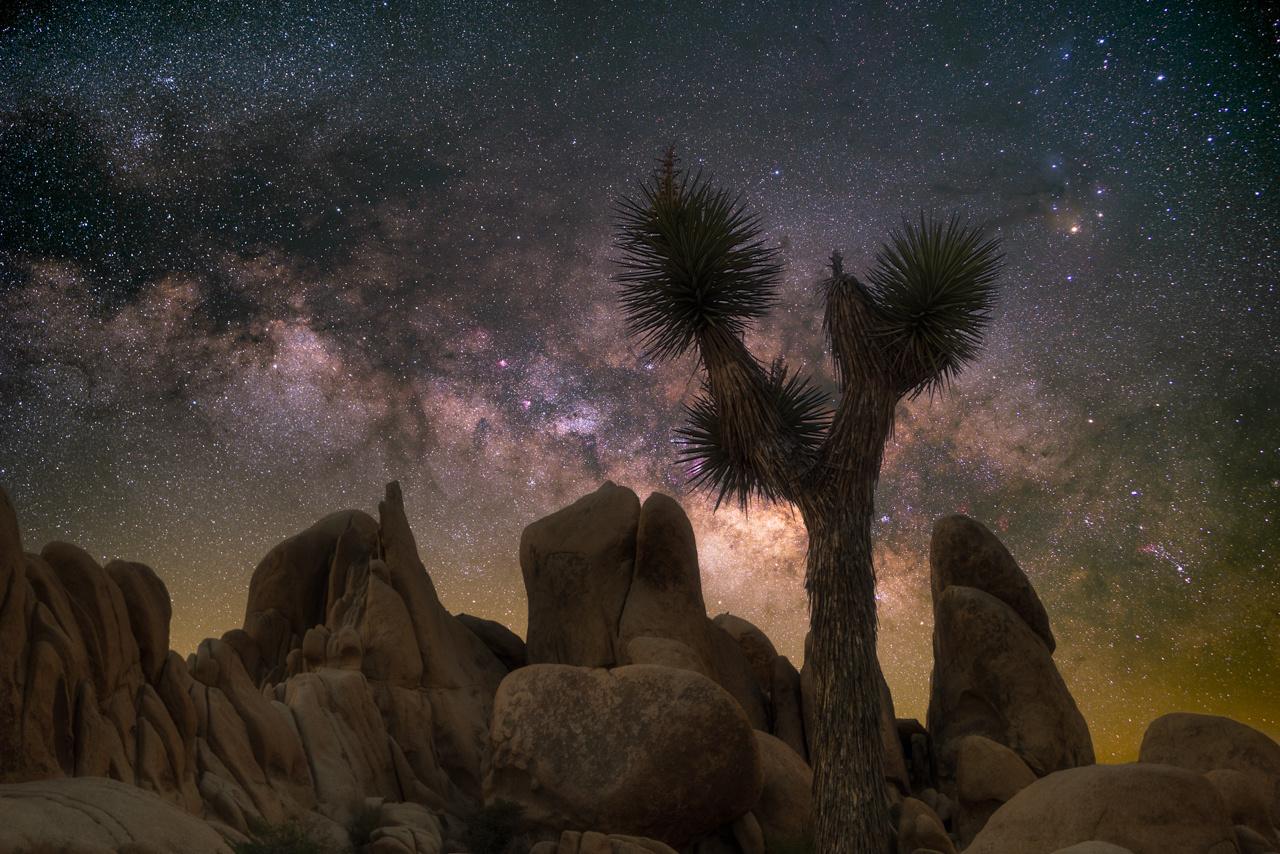 Quintessential Joshua Tree by Ryan Luna