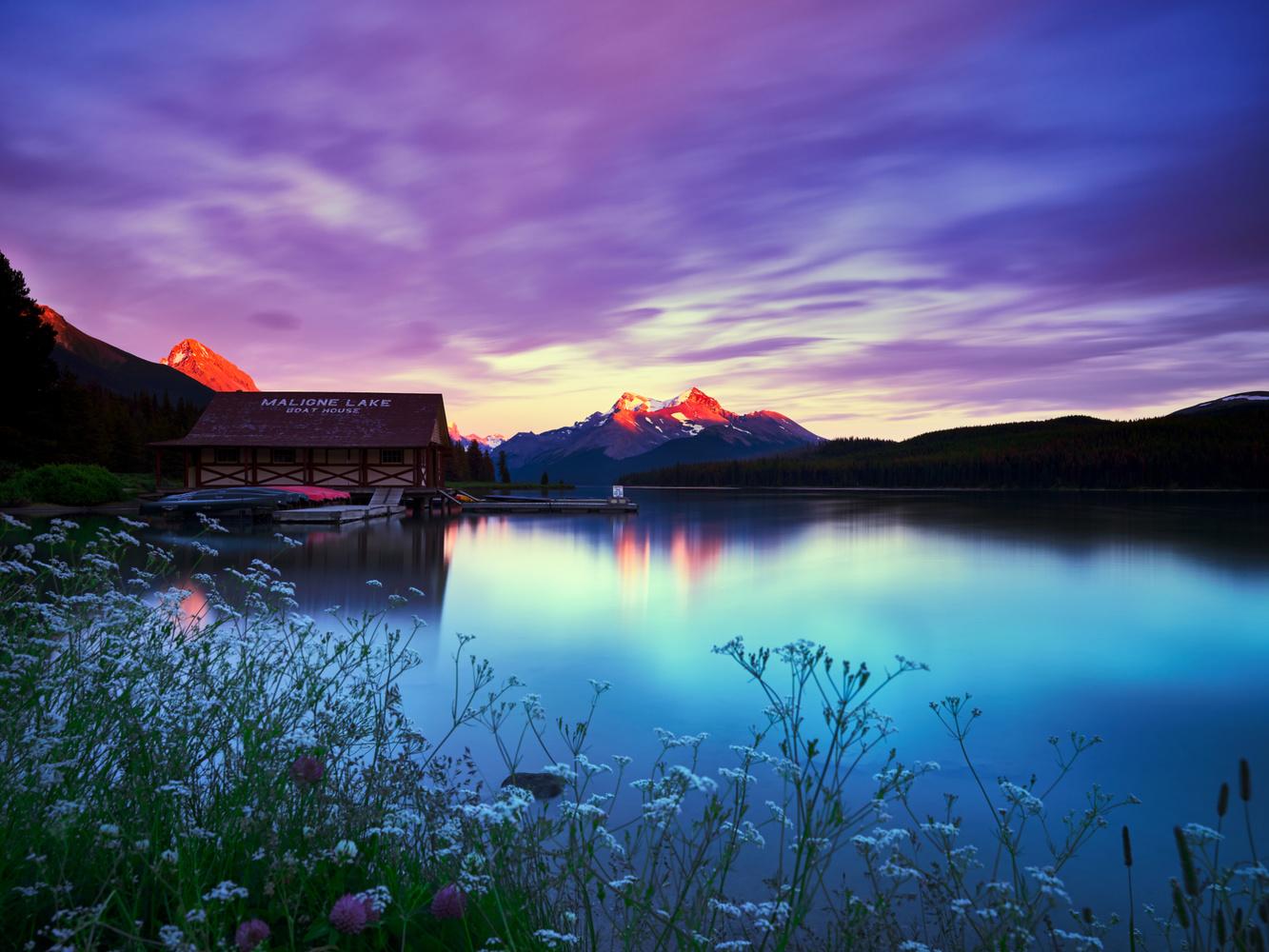 Majestic by Rhonald Rose
