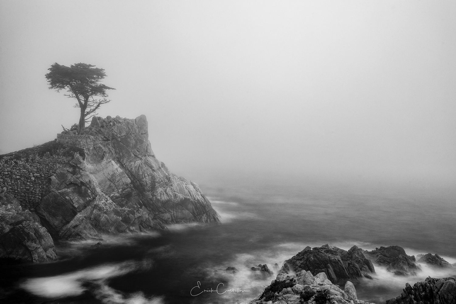 Lone Cypress in Fob by Erick Castellon
