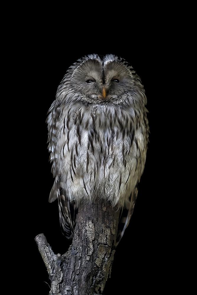 Good night! by Stefano Venturi