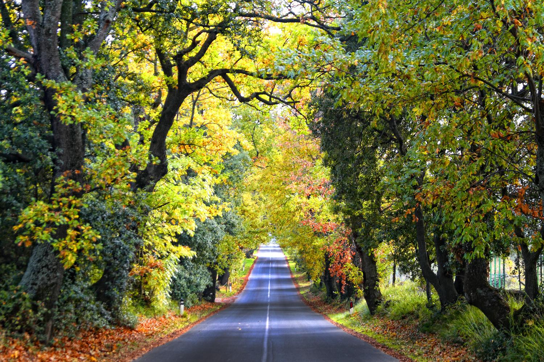 The road by Stefano Venturi