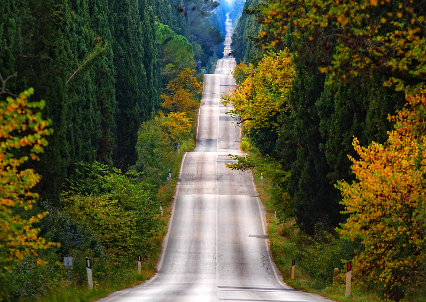 Cypress road by Stefano Venturi