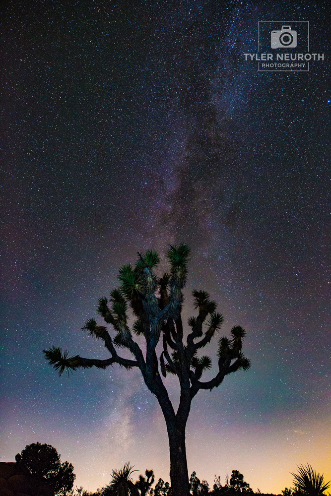 Galactic Joshua Trees by Tyler Neuroth