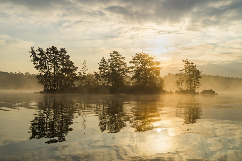 Foggy Morning by Daniel Möckel